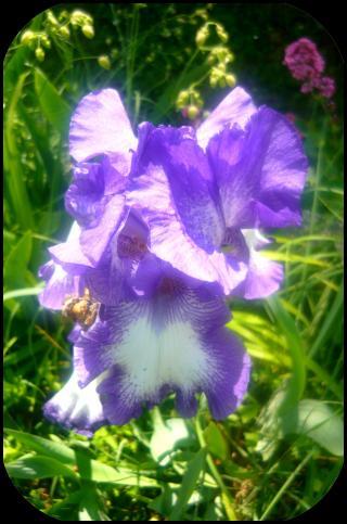 http://les-trouvailles-d-anaya.cowblog.fr/images/jolie2.jpg